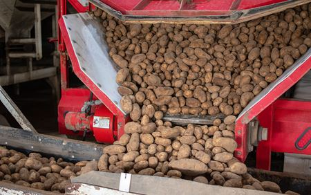 Receiving Potatoes